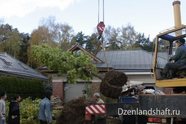 arhangelskoe1-landscaping-design-48A826CF8E-33B1-4B96-94D9-61EE263B4392.jpg