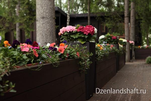 landscaping-design-newriga-206B98034-D907-405C-85BD-3863CA88B383.jpg
