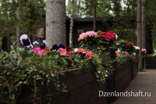 landscaping-design-newriga-6A5C77771-7096-408D-8EA6-C526576DE3A5.jpg